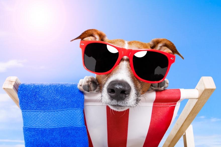 Dog sunbathing on beach