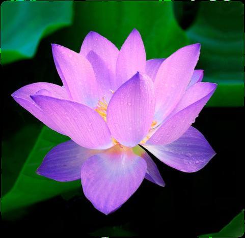 Meditations Flower