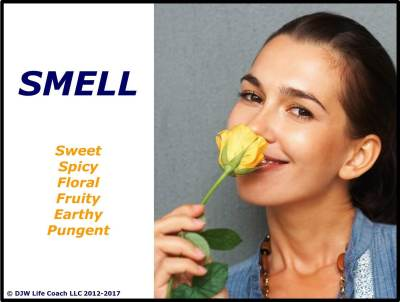 How the Sense of Smell Seasons Our Journey